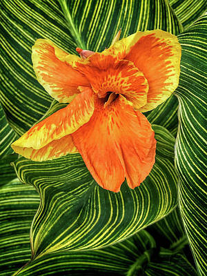 Photograph - Tropicanna Beauty by Jill Love