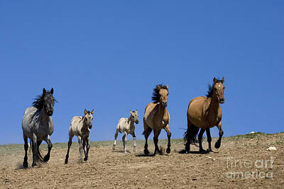 Trotting Mustangs Art Print by Jean-Louis Klein & Marie-Luce Hubert