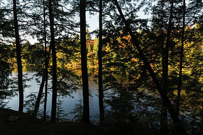 Photograph - Trough The Pine Screen - Hidden Lake In An Autumn Forest by Georgia Mizuleva