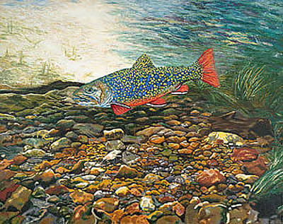 Trout Painting - Trout Art Fish Art Brook Trout Suspended Artwork Giclee Fine Art Print by Baslee Troutman