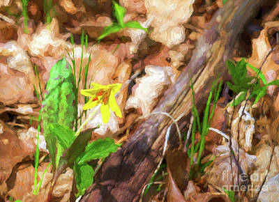 Photograph - Trout Lily - Painterly by Les Palenik
