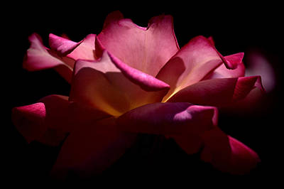 Photograph - True Beauty by Lori Seaman