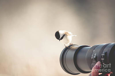 Photograph - True Birding by Cheryl Baxter
