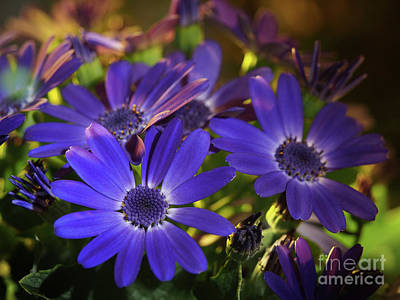 True Blue In The Late Afternoon Sunlight Print by Dorothy Lee