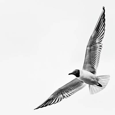 Photograph - True freedom by Fotografie Jeronimo