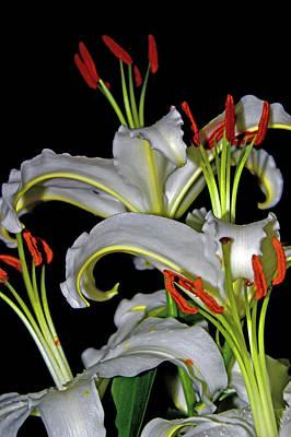 True Lilies Original by Andy Za