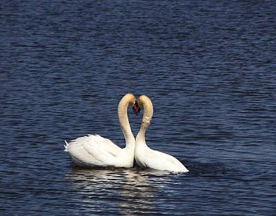 Photograph - True Love by Davandra Cribbie