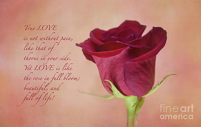 Photograph - True Love Rose by Sharon McConnell