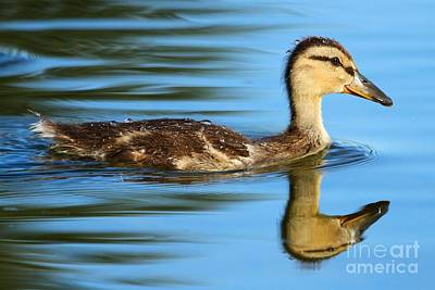 Photograph - True Reflection by Heather King