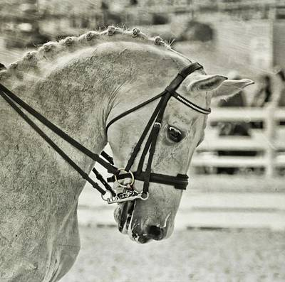 Photograph - True White Steed by JAMART Photography