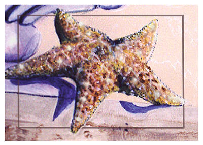 Painting - Trum L'oeil.star Fish by Thomas Lupari