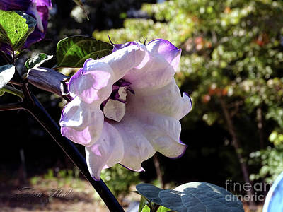Photograph - Trumpet Flower by Melissa Messick