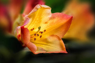 Photograph - Trumpet Of Spring by Mary Jo Allen