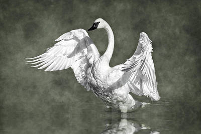 Photograph - Trumpeter Swan In The Fog by Wes and Dotty Weber