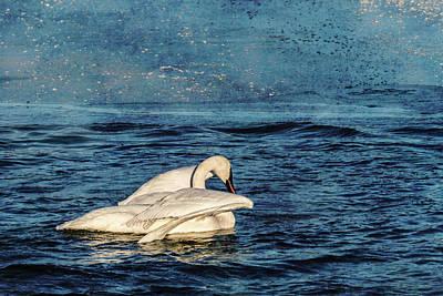 Fleetwood Mac - Trumpeter Swan Journey by Patti Deters