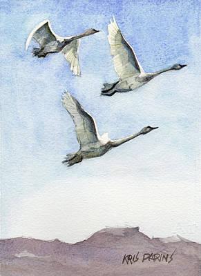 Trumpeter Swan Study Art Print by Kris Parins