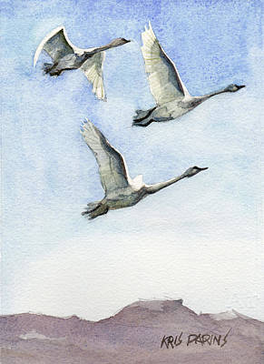 Foothills Painting - Trumpeter Swan Study by Kris Parins