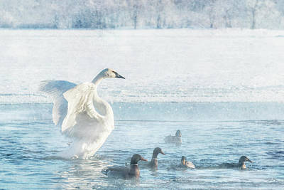 Photograph - Trumpeter Swan With Ducks #2/2 by Patti Deters