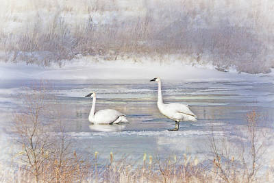 Art Print featuring the photograph Trumpeter Swan's Winter Rest by Jennie Marie Schell