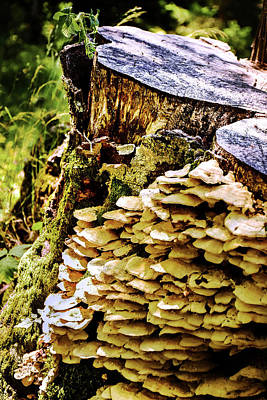Photograph - Trunk And Mushrooms by Alessandro Della Pietra
