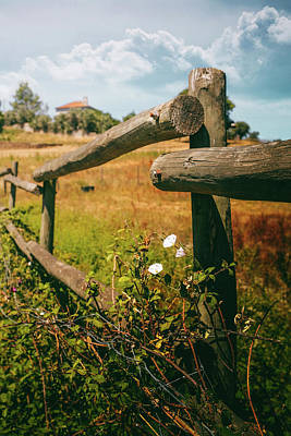 Photograph - Trunk Fence by Carlos Caetano