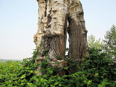 Photograph - Trunk by Martin Cline