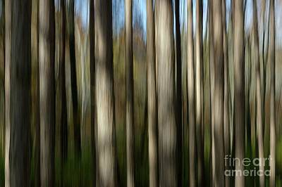 Photograph - Trunks Abstract by Randy Pollard