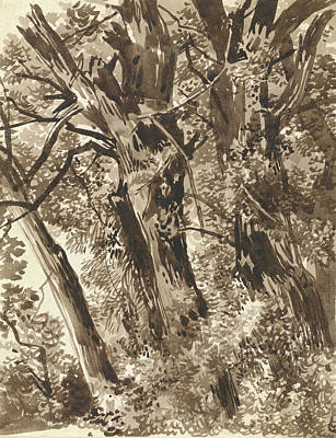 Drawing - Trunks And Branches by Franz Kobell
