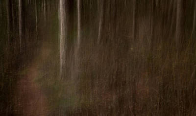 Icm Photograph - Trunks by Chris Dale