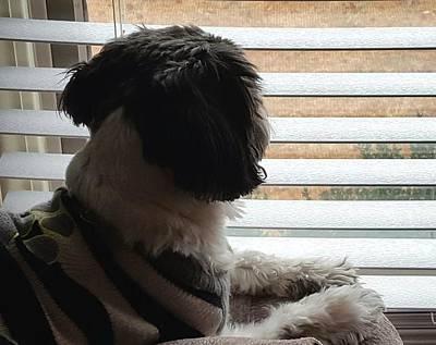 Photograph - Tubbs Window Gazing by Greg Jackson