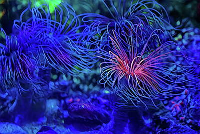 Photograph - Tube Anenome by Russ Harris