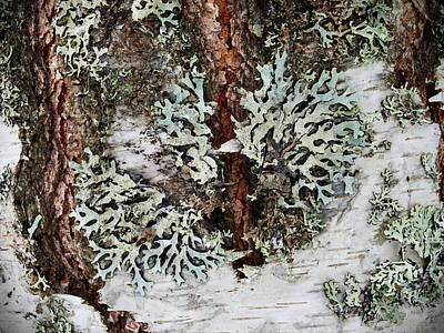 Photograph - Tube Lichen by Jouko Lehto