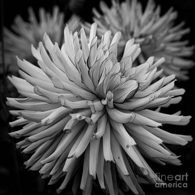 Photograph - Tubular Petals by Patricia Strand