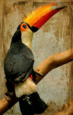 Tucan Do Art Print by Diana Angstadt