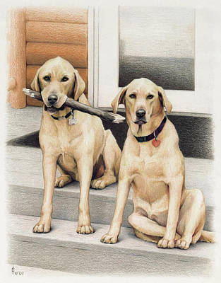 Labrador Drawing - Tucker And Lily by Amy S Turner