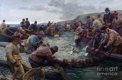 School Of Fish Painting - Tucking A School Of Pilchards by Percy Robert Craft