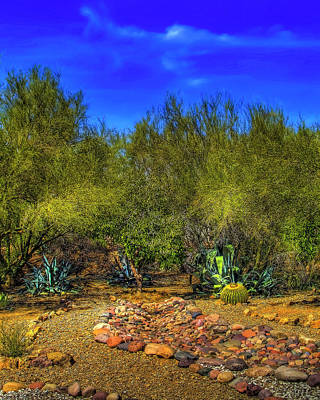 Photograph - Tucson Flora by Gordon Engebretson
