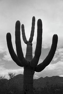 Photograph - Tucson II Bw by David Gordon