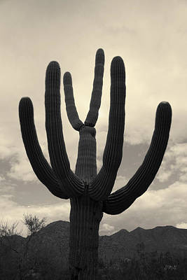 Photograph - Tucson II Toned by David Gordon