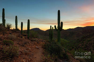 Photograph - Tucson Mountain Sunset by Mike Dawson