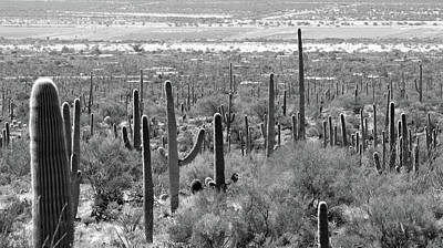 Photograph - Tucson No. 11-2 by Sandy Taylor
