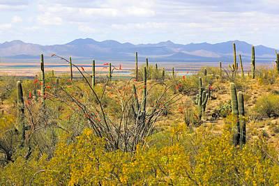 Photograph - Tucson Suburbs by Kathy Bassett