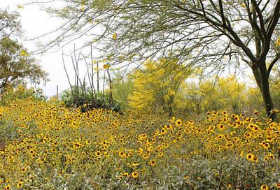 Photograph - Tucson Wildflowers by Kume Bryant
