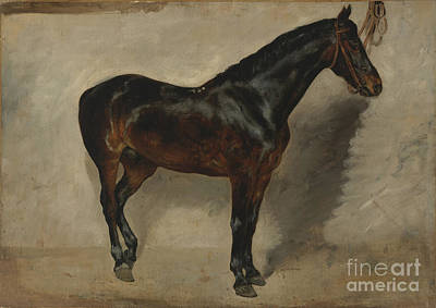 Tudy Of A Brown-black Horse Tethered To A Wall Art Print by MotionAge Designs