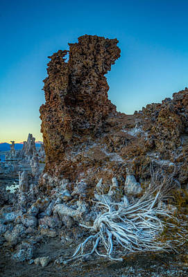 Photograph - Tufa And Roots by Rikk Flohr