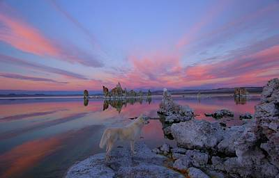 Photograph - Tufa Treasure by Sean Sarsfield