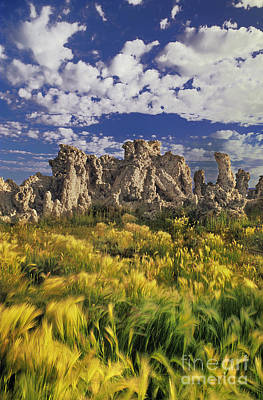 Photograph - Tufas And Wild Grasses Mono Lake State Park California by Dave Welling