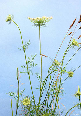 Photograph - Tuft Of Queen Anne's Lace by Lise Winne