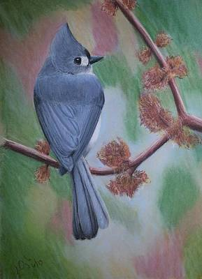 Painting - Tufted Ear Titmouse by Joseph Ogle