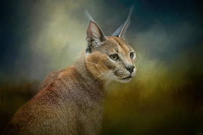 Photograph - Tufted Ears by Jai Johnson